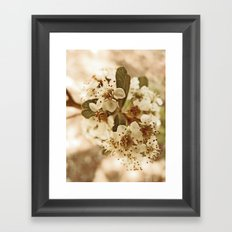 white blossoms on a tree. Framed Art Print