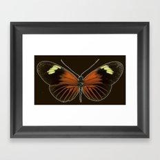 Untitled Butterfly Framed Art Print