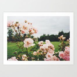 Pink Roses in Marie Antoinette's Garden, Versailles, France Art Print