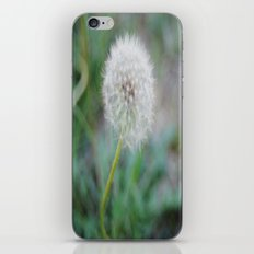 Lone Dandelion iPhone & iPod Skin