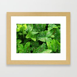 caladium Framed Art Print