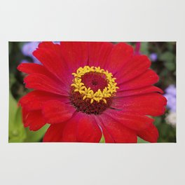 Red zinnia - blazing ring of fire Rug