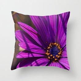 Purple African Daisy Close Up Throw Pillow
