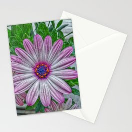 daisy osteospermum Stationery Cards