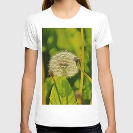 Last Dandelion in Sunlight T-shirt