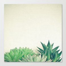 Succulent Forest Canvas Print