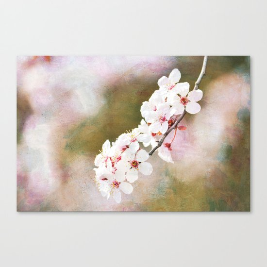 Pretty Cherry Blossom Flowers Canvas Print