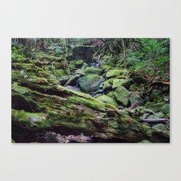 Yakushima Greenery Canvas Print