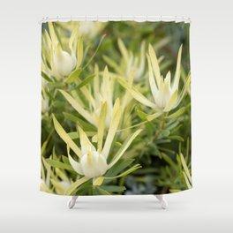 Yellow Countess Protea Shower Curtain