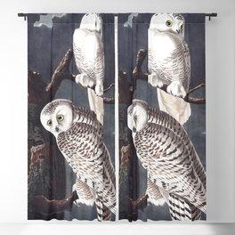 Snowy owl, Birds of America, Audubon Plate 121 Blackout Curtain