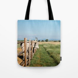 Horny cow behind wooden fence  Tote Bag