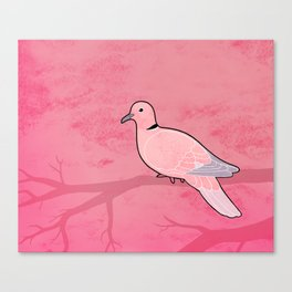 Ring Dove (Streptopelia risoria) Canvas Print