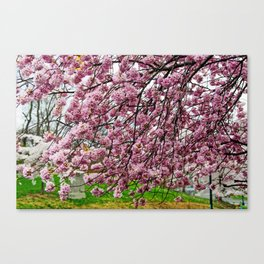 Happiness - Spring Blossoms Canvas Print