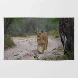 Female Lion at Tembe Elephant Park Rug