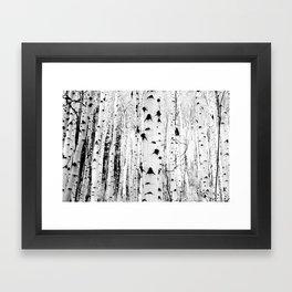 Black and White Aspen Trees Framed Art Print