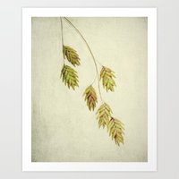 botanical Art Prints featuring botanical by Bonnie Jakobsen-Martin