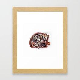 Rotting Pomegranate  Framed Art Print
