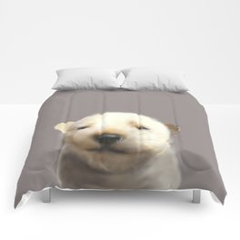 Jindo puppy runny nose Comforters