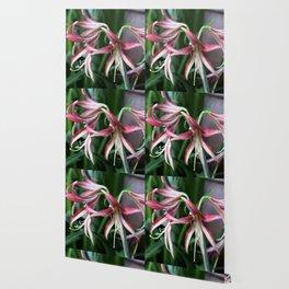 Longwood Gardens Orchid Extravaganza 46 Wallpaper