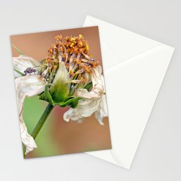"""flower, white flower, fly, insect, macro, photo-macro. """"Destructured flower and little fly"""" Stationery Cards"""