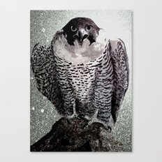 falcon 2 Canvas Print