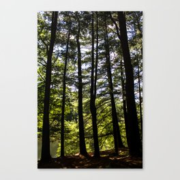 Stand of Trees Canvas Print