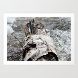 Cedar Log Art Print