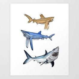 Mako Blue White Tip Sharks Art Print