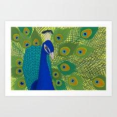 Peacock in Colour Art Print