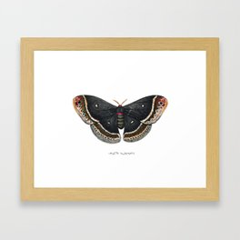 Calleta Silkmoth  (Eupackardia calleta) Framed Art Print