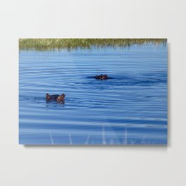 Hippos Hiding in the Cool Water on a Hot Day Metal Print
