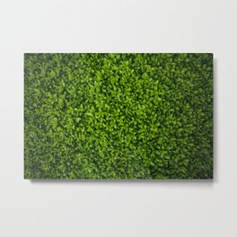Green Leaves Pattern Metal Print
