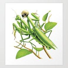 Safe sex for mantis Art Print