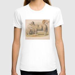 Vintage Domestic Sheep Illustration (1874) T-shirt