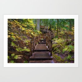 Giant Cedars Boardwalk in Revelstoke National Park, BC Canada Art Print