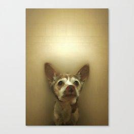 Dog: Tintin in Renaissance Canvas Print