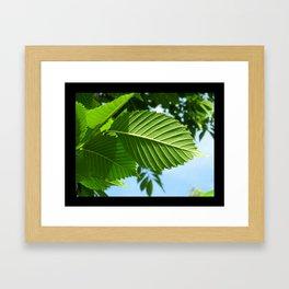 Crisp Leaves Framed Art Print