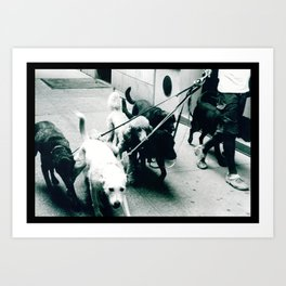 Dog Walker NYC  Art Print