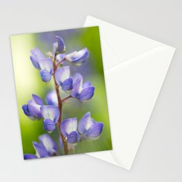 Yellowstone National Park - Silver Lupine Stationery Cards