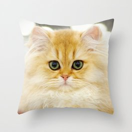 Very young red fluffy cat Throw Pillow