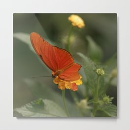 Orange-colored Butterfly Metal Print