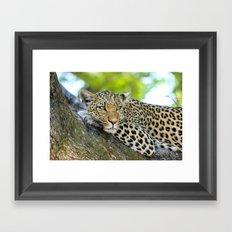 A Leopards Gaze 2 Framed Art Print