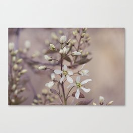 Spring tree flowers Canvas Print