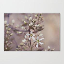 Spring tree flowers Canvas Print