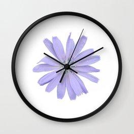 Chicory Flower Wall Clock