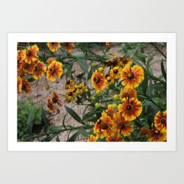 Young and Old Art Print