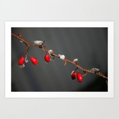 Ruby Red, Christmas, Winter Art Print