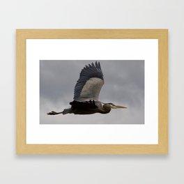 Bird series: heron in flight Framed Art Print