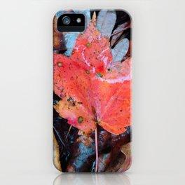 autumnal reverie 646 iPhone Case
