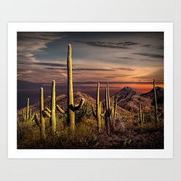 Painted Sky over Saguaro Cactuses in Saguaro National Park Art Print